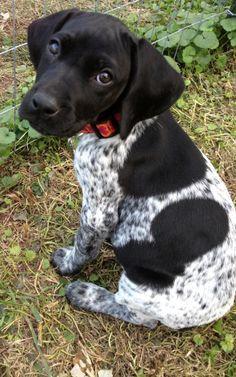I don't have a dog, but I'd like to have this one!