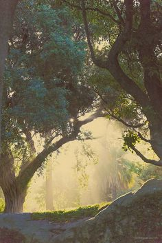 Sydney Royal Botanic Gardens: part 2  faithieimages.com