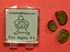 Mexican Jumping Beans!