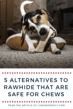 Rawhide bones can come with some health concerns. These 7 safe alternatives to rawhide dog chews and bones are a perfect rawhide alternative. Lazy Dog Breeds, Top Dog Breeds, Dogs And Kids, Big Dogs, Designer Dogs Breeds, Smartest Dog Breeds, Hypoallergenic Dog Breed, Dog Food Recall, Beautiful Dog Breeds