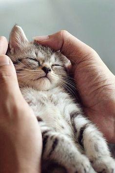 Καλημέρα γατόνια!