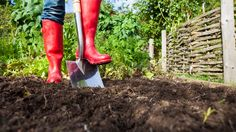 A glorious autumn season has arrived -- and that means your lovely lawn will require some fall yard maintenance. Read on to know which chores to do. The post 4 Fall Yard Maintenance Chores to Tackle N Benefits Of Gardening, Organic Gardening, Gardening For Beginners, Gardening Tips, Gardening Supplies, Red Wellies, Yard Maintenance, Plantation, Front Yard Landscaping