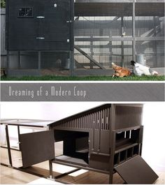 Melancholy Smile: Modern Chicken Coops