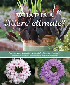 Microclimates mean variations in growing conditions within your given zone. Learn more here.