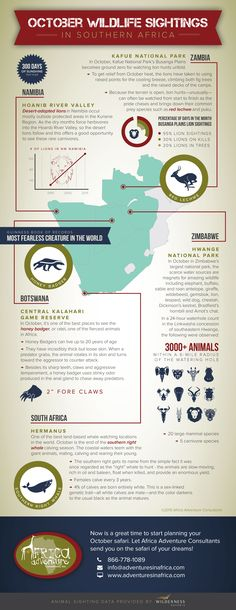 Africa Wildlife Infographic, October Sightings, #AfricaWildlife