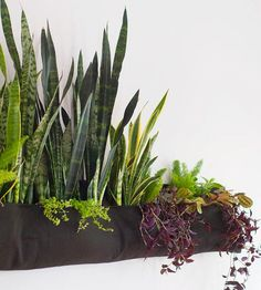 Is your house roaming with kids and pets? Try attaching your indoor garden to the wall for your family's safe and stylish viewing pleasure! First, hang a specially made wall pocket suitable for planting. Then consult your local nursery for a variety of easy-care plants to add texture and visual appeal./
