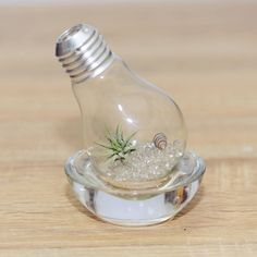 The Guideline to Make an Air Plant Terrarium - http://outdoor.tybeefloatilla.com/the-guideline-to-make-an-air-plant-terrarium/ : #Terrariums A air plant terrarium is a glass-enclosed container used for the accommodation of plants. Plant terrariums are strictly utilitarian, made with a large door or aquarium, or in a jar decorative vintage pharmacy or a new over-sized vase. Choose small installations is suitable for the size of the...