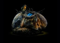 Surreal Animal Illustration by Jacub Gagnon – Fubiz Media Ap Studio Art, Animal Art, Canadian Artists, Surreal Art, Painting, Surrealism, Art, Animal Illustration, Animal Paintings