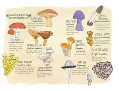 """Nature Anatomy"" by Julia Rothman"