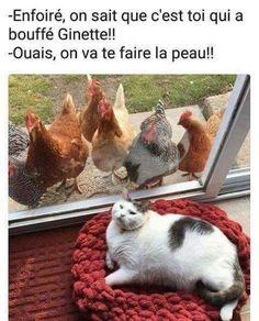 R.I.P Ginette #rire #drole #humour #lestrompettesdunet #grodav13  #drôle #Ginette #grodav13 #humour #lestrompettesdunet #RIP #rire