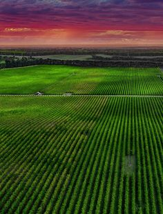 World Famous, South Australia, Our World, The Good Place, Vineyard, Beach, Places, Travel, Viajes
