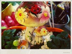 Here I planted a few herbs around this colorful mushroom. I love it :)
