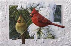 cardinals birds images - Google Search