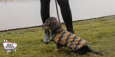 Joep's Jas Site, Crochet, Dogs, Animals, Animales, Animaux, Pet Dogs, Ganchillo, Doggies