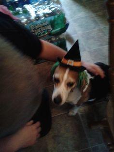 Happy Halloween my doggie friends!