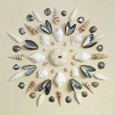 Mandala aus Muscheln Mandala from shells. Seashell Art, Seashell Crafts, Flower Mandala, Mandala Art, Sea Crafts, Nature Crafts, Land Art, Seashell Projects, Driftwood Projects
