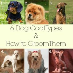 6 Dog Coat Types and How to Groom Them. Number 1 looks like Walt! Dog Grooming Styles, Dog Grooming Shop, Dog Grooming Salons, Dog Grooming Business, Poodle Grooming, Dog Care Tips, Pet Care, Dog Spa, Coat Types