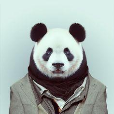 averagepanda