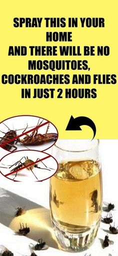 Spray This In Your Home And There Will Be No Flies, Cockroaches Or Mosquitoes In Only 2 Hours!Spray This In Your Home And There Will Be No Flies, Cockroaches Or Mosquitoes In Only 2 Hours! Health Remedies, Home Remedies, Natural Remedies, Flea Remedies, Roach Remedies, Bodybuilding Motivation, Aquaponics, Pest Control, Bug Control