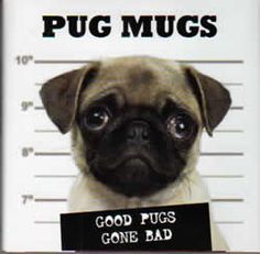Pug Mugs - A great humorous gift for the pug lover in your life with color photos. Free shipping.