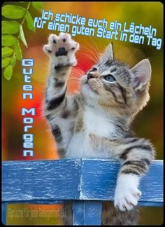 Happy Day, Carpe Diem, Good Morning, Humor, Animals, Image, Star, Quotes, Days Of Week