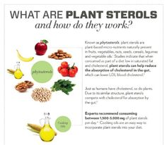 Cooking Oils Infographic - Plant Sterols