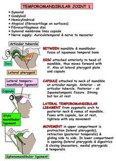 Instant Anatomy - Head and Neck - Joints - Temporomandibular joint 1 Anatomy Head, Gross Anatomy, Anatomy Study, Body Anatomy, Dental Anatomy, Medical Anatomy, Dental Hygiene School, Dental Assistant, Facial Nerve