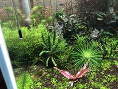 I try out Ocean Solution liquid fertilizer and the eriocaulon has double the size. Liquid Fertilizer, Aquatic Plants, Ocean, Water Plants, The Ocean, Sea