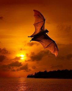 Orange bat against the golden sky