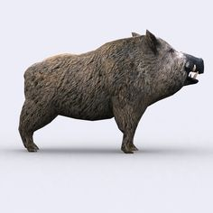 Elevate your workflow with the Animals Wild Boar asset from Find this & other Animals options on the Unity Asset Store. Blender 3d, Wild Boar Image, Animal Sculptures, Lion Sculpture, Baboon, Conceptual Design, Wild Animals, Animal Drawings, Polar Bear