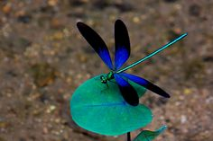 Most Beautiful Dragonfly | Recent Photos The Commons Getty Collection Galleries World Map App ...