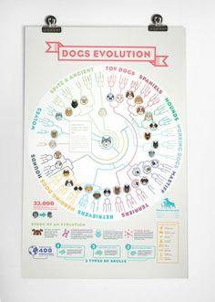 강아지의 진화과정에 관한 인포그래픽