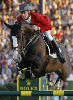 Dutch Warmblood (Plot Blue)- The breed's athleticism makes them a popular choice for showjumping and dressage horses.