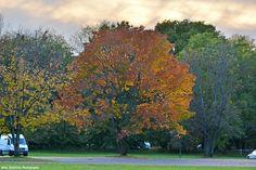 Bursts of Autumn at Neshaminy State Park