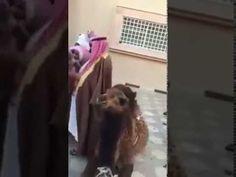 Saudi Arabia Eid ul Adha Celebration | Camel  Qurbani |