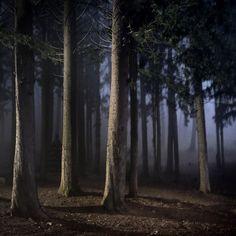 Photo de l'album Vertical trees - GooglePhotos