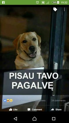 Funny Pictures, Dogs, Animals, Art, Fanny Pics, Art Background, Animales, Animaux, Funny Pics