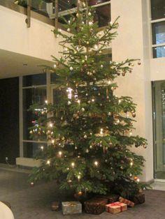 This handsome specimen has a size of approx. 4.5 metres #ParkInn #Bochum http://www.parkinn.com/hotel-bochum