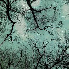 Winter Teal Christmas Sky by Raceytay - modern - artwork - Etsy Fine Art Photography, Nature Photography, Fantasy Photography, Whimsical Photography, Exposure Photography, Winter Photography, Amazing Photography, Landscape Photography, Grand Art Mural