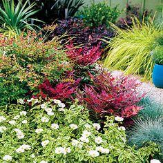 Colorful, hardy shrubs