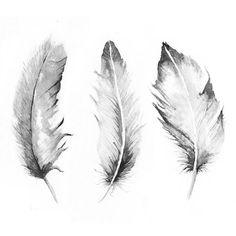 Beautiful feather illustration