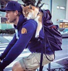 【画像】 主人の背中で寝ている柴犬が可愛いすぎる : ゴールデンタイムズ
