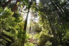 Tajemná energie stromů | Tajemná místa