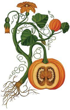 Botanicum (Welcome To The Museum)  by Kathy Willis (Author), Katie Scott (Illustrator)