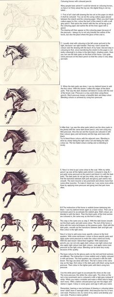 Colouring horses with coloured pencils Many people have asked me to do one of these and here it is, finally. I hope you can use this! Please dont mind the lay-out, its crappy, but I'm a traditional...
