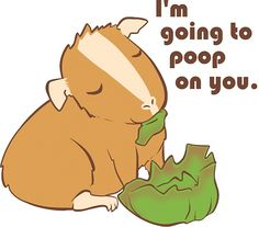 Guinea pig anatomy ... so true :) LOL