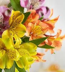 Natural Beautiful Flowers, Beautiful Flowers Images, Flower Images, Amazing Flowers, Nice Flower, Peruvian Lilies, Most Popular Flowers, Dendrobium Orchids