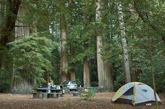 jedediah smith redwoods state park campsite photos - Yahoo Image Search Results
