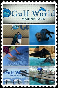 Gulf world marine park is a Great place for meeting animals and petting them. They even have a program where you can be a trainer for a DAY!!! Did I mention that they let you SWIM and INTERACT with DOLPHINS?!!!!!