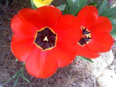 Also from my garden in TN